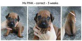3weeks-pink