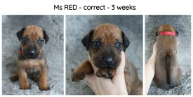 3weeks-red
