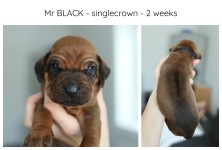 2weeks_black