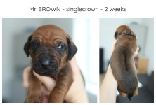 2weeks_brown