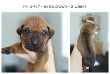 2weeks_grey