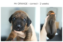 2weeks_orange