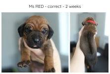 2weeks_red