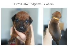 2weeks_yellow