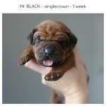 1week_black