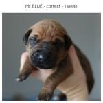 1week_blue