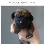 1week_orange