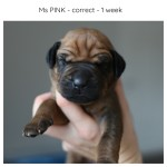1week_pink