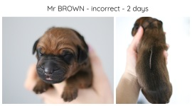 2days_brown