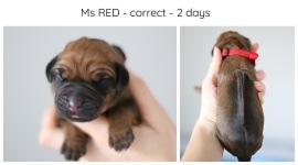 2days_red