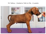 6weeks-yellow