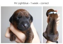 1_week_lightblue