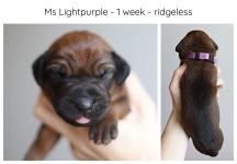 1_week_lightpurple