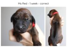 1_week_red