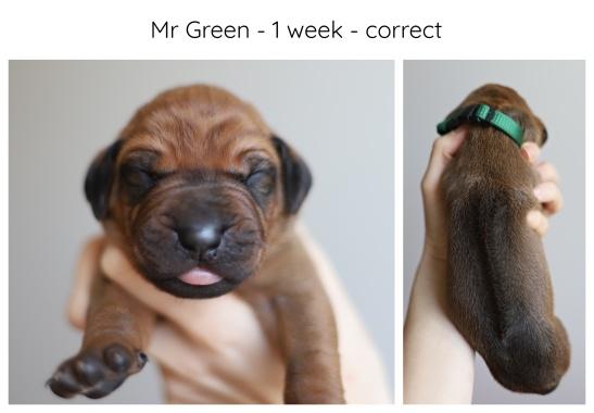 1_week_green