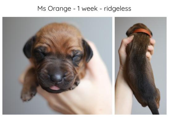 1_week_orange