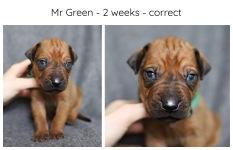 2_weeks_green