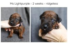 2_weeks_lightpurple