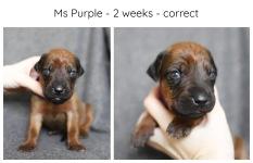 2_weeks_purple