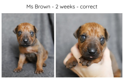 2_weeks_brown
