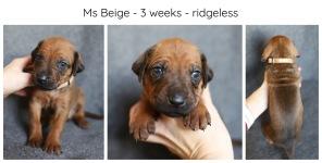 3_weeks_beige