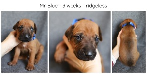 3_weeks_blue