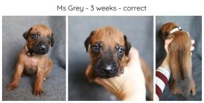 3_weeks_grey