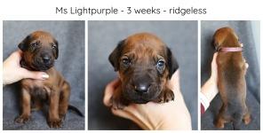 3_weeks_lightpurple