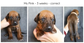 3_weeks_pink