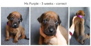 3_weeks_purple