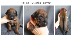 3_weeks_red