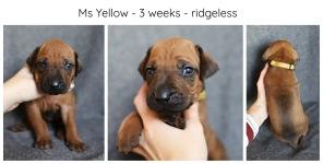 3_weeks_yellow