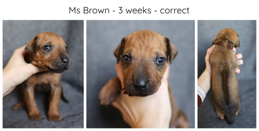 3_weeks_brown