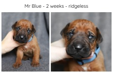 2_weeks_blue