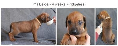 4_weeks_beige