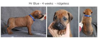 4_weeks_blue