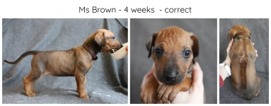 4_weeks_brown
