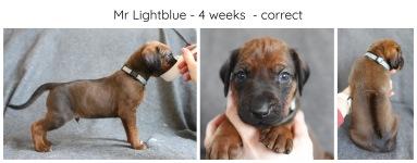 4_weeks_lightblue