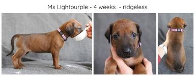 4_weeks_lightpurple