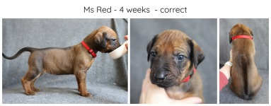 4_weeks_red