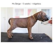 5_weeks_beige