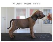 5_weeks_green