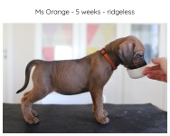 5_weeks_orange