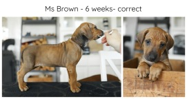 6_weeks_brown