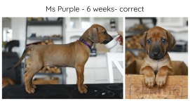 6_weeks_purple