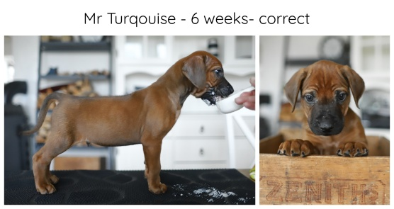 6_weeks_turkos