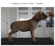 7_weeks_brown
