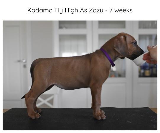 7_weeks_purple