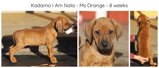 8_weeks_orange
