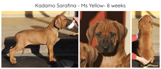 8_weeks_yellow
